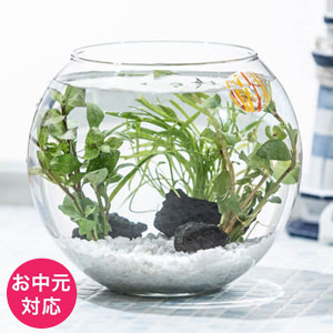 お中元 アクアリウムキット「癒しの水中庭園」