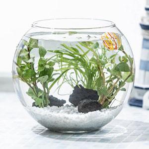 アクアリウムキット「癒しの水中庭園」