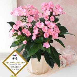 鉢植え「におい桜 ココ〜ワンランク上の上質ギフト〜」