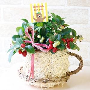 鉢植え「Berry's Cafe〜秋の実り〜」