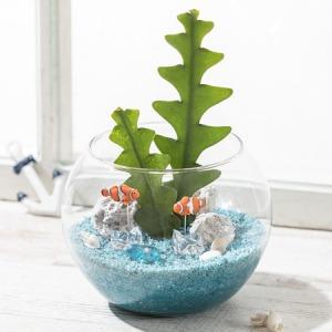 観葉植物「Fishbone Cactus」