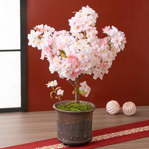 EX鉢植え「京のかおり〜南殿桜〜」