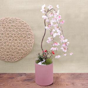 盆栽「しだれ桜」
