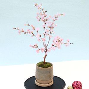 盆栽「富士桜 湖上の舞」