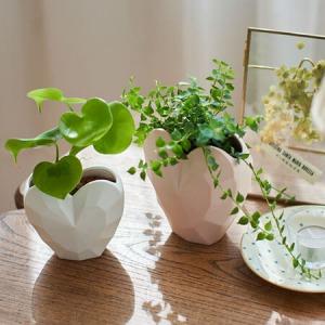 観葉植物「ハートフィロデンドロン&ミリオンハート」