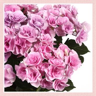 6月の花贈り記念日花贈り記念日イイハナ